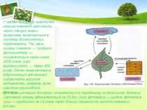 У межах біосфери практично кожний елемент проходить через ланцюг живих органі...