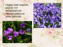Серед трав´янистих рослин тут зустрічаються півники сибірські, чина болотна.