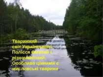 Тваринний світУкраїнського Полісся багатий і різноманітний. Особливо цінними...