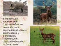 У Рівненській, Чернігівській і Сумській областях поширенілось європейський, ...