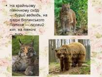 На крайньому північному сході —бурий ведмідь,на півдні Волинського Полісся ...