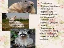 Українське Полісся, особливо Волинське і Чернігівське — важливі райони акліма...