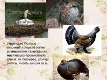 Українське Полісся — головний в Україні регіон розмноження таких цінних мисли...
