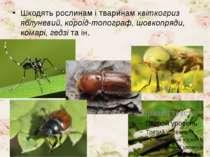 Шкодять рослинам і тваринам квіткогриз яблуневий, короїд-топограф, шовкопряди...