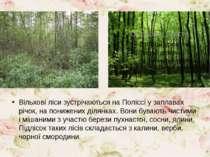 Вільхові ліси зустрічаються на Поліссі у заплавах річок, на понижених ділянка...