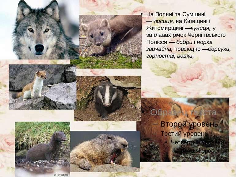 На Волині та Сумщині —лисиця,на Київщині і Житомирщині —куниця,у заплавах ...