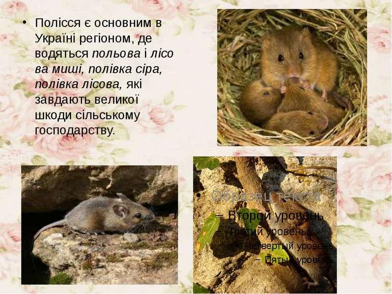 Полісся є основним в Україні регіоном, де водятьсяпольоваілісова миші, пол...