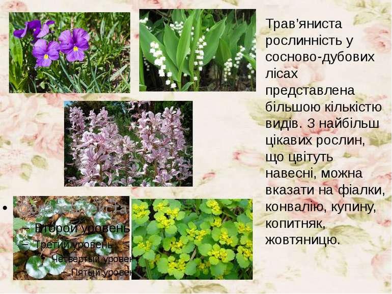 Трав'яниста рослинність у сосново-дубових лісах представлена більшою кількіст...