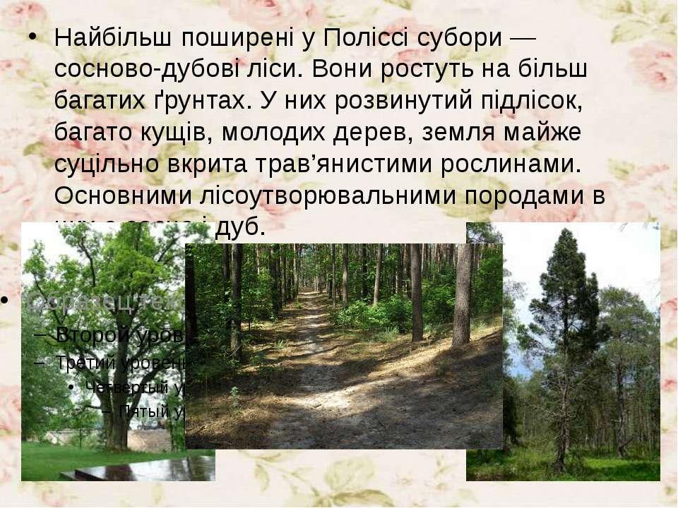 Найбільш поширені у Поліссі субори — сосново-дубові ліси. Вони ростуть на біл...