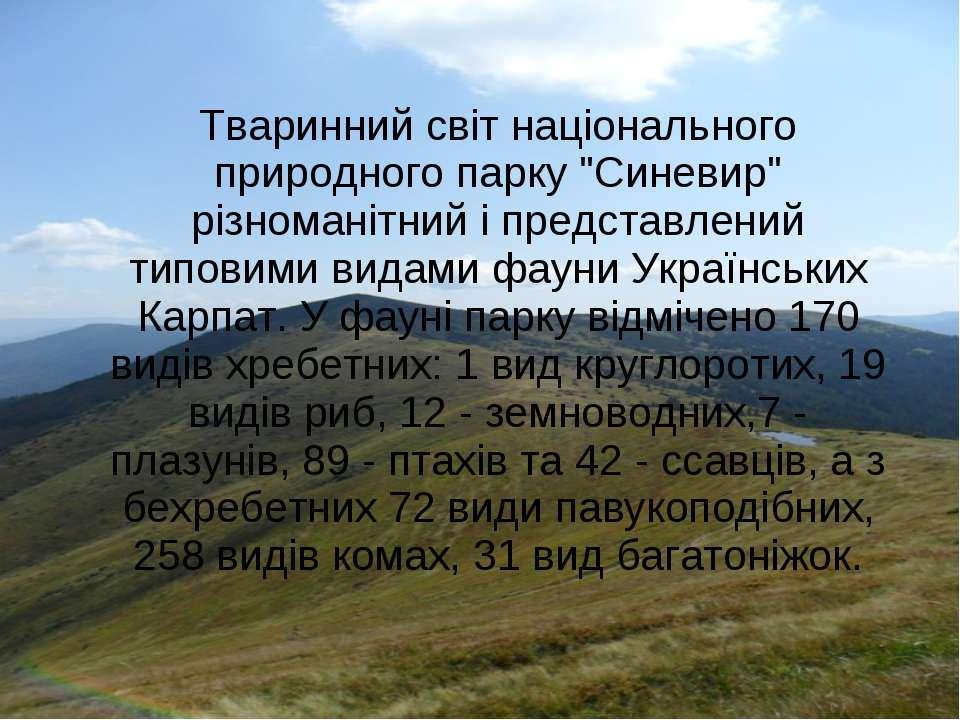 """Тваринний світ національного природного парку """"Синевир"""" різноманітний і предс..."""