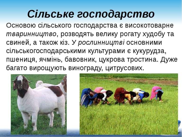 Сільське господарство Основою сільського господарства є високотоварне тваринн...