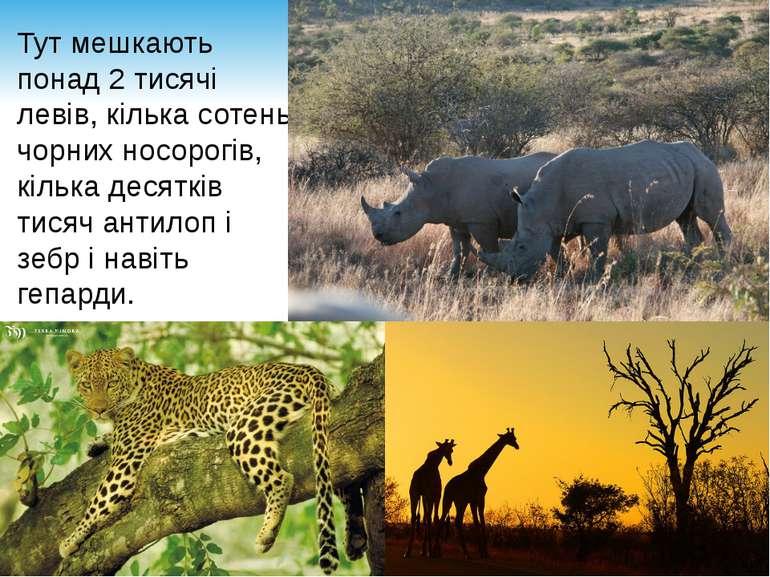 Тут мешкають понад 2 тисячі левів, кілька сотень чорних носорогів, кілька дес...