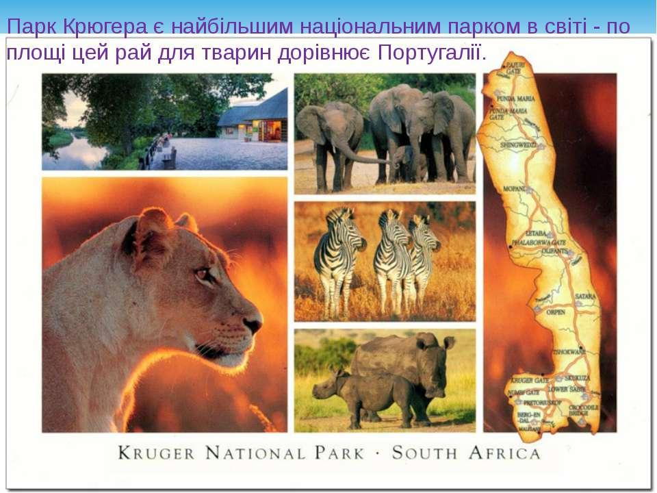 Парк Крюгера є найбільшим національним парком в світі - по площі цей рай для ...