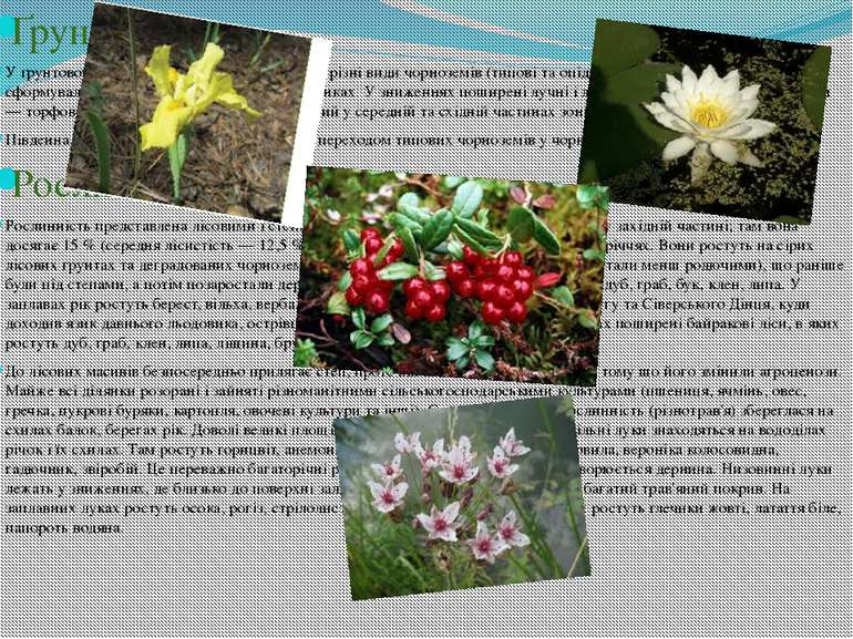Ґрунти У ґрунтовому покриві лісостепу переважають різні види чорноземів (типо...