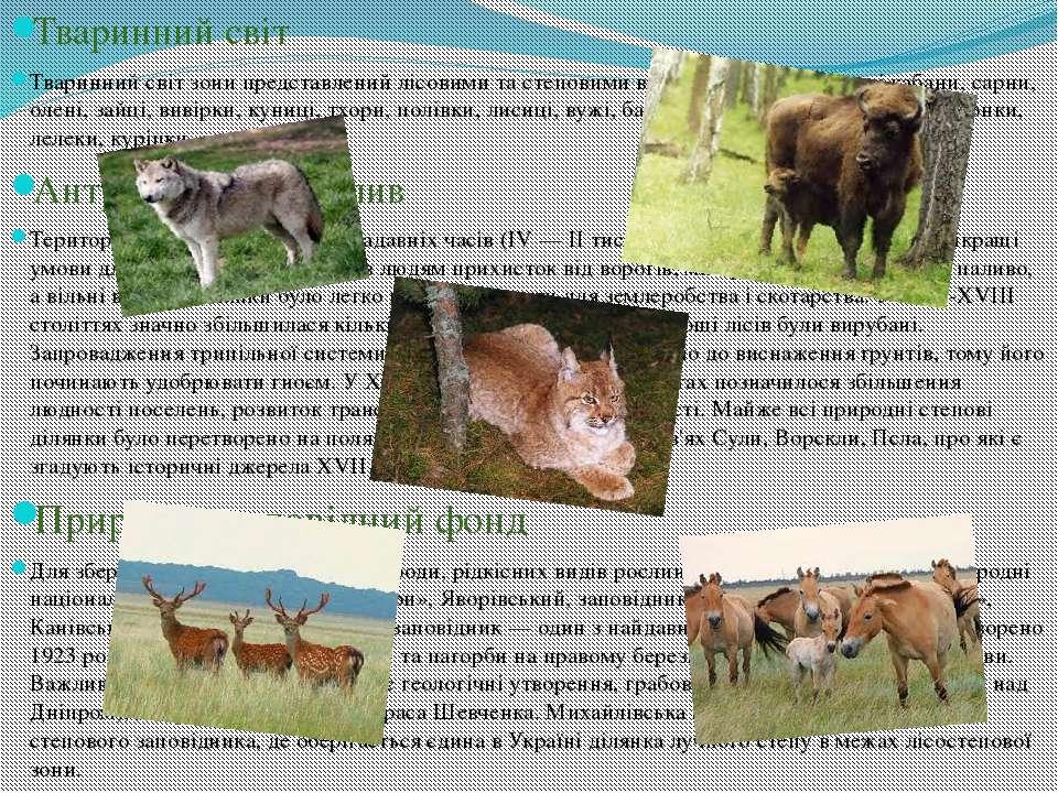 Тваринний світ Тваринний світ зони представлений лісовими та степовими видами...