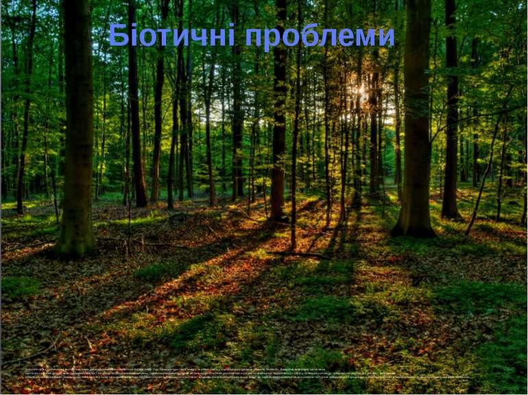 Значення лісів є глобальним і життєво важливим для всього комплексу екологічн...