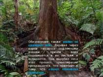 Обезлесение также влияет на круговорот воды. Деревья через корни питаются под...