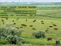 Однако главной причиной вырубки лесов является увеличение потребности в еде, ...