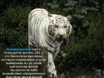 Вымирающие виды (англ. Endangered species, EN) — это биологические виды, кото...