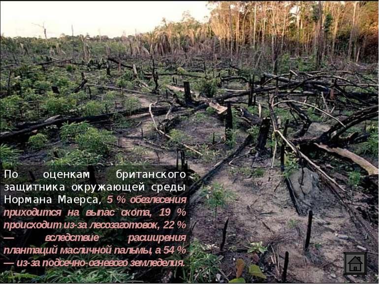 По оценкам британского защитника окружающей среды Нормана Маерса, 5 % обезлес...