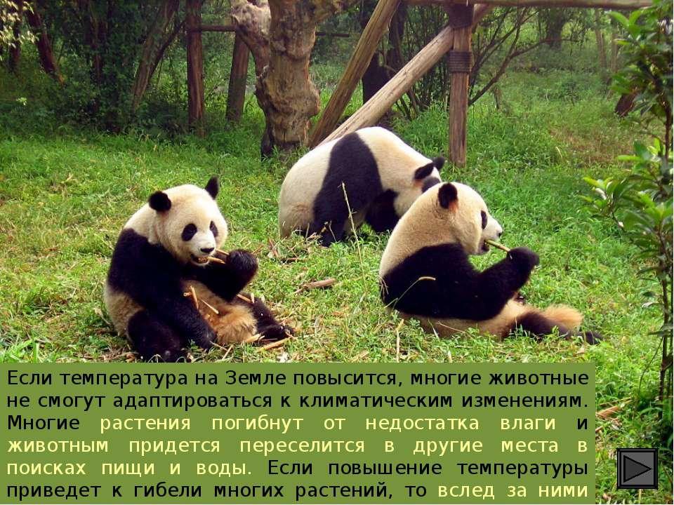 Если температура на Земле повысится, многие животные не смогут адаптироваться...