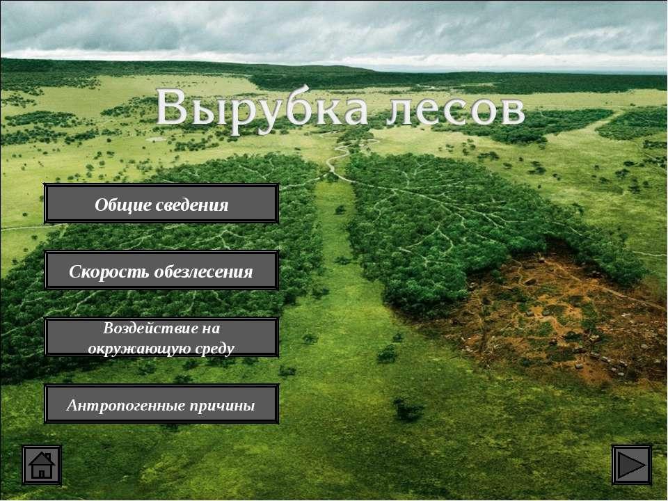 Общие сведения Скорость обезлесения Воздействие на окружающую среду Антропоге...