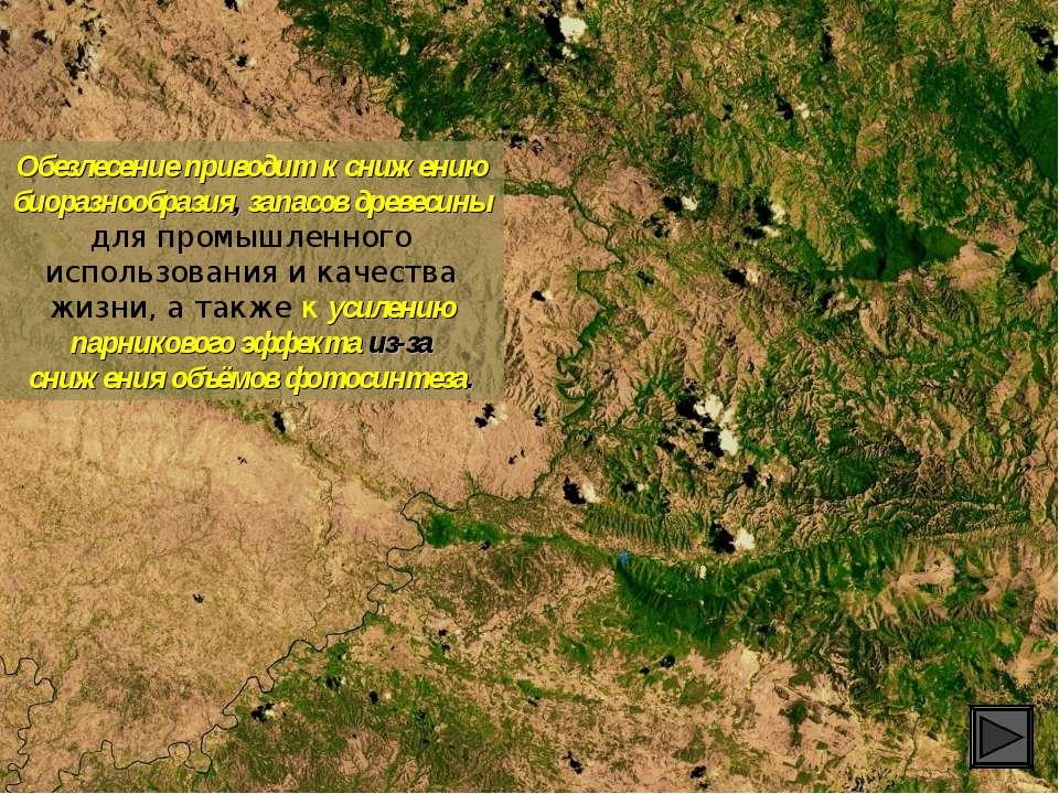 Обезлесение приводит к снижению биоразнообразия, запасов древесины для промыш...