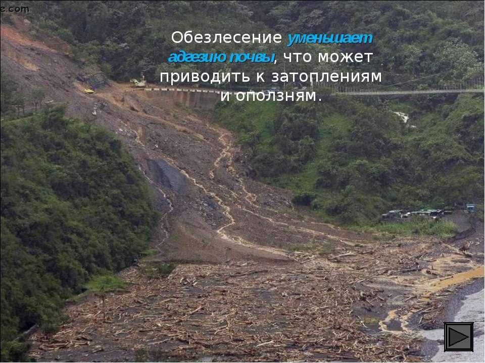 Обезлесение уменьшает адгезию почвы, что может приводить к затоплениям и опол...