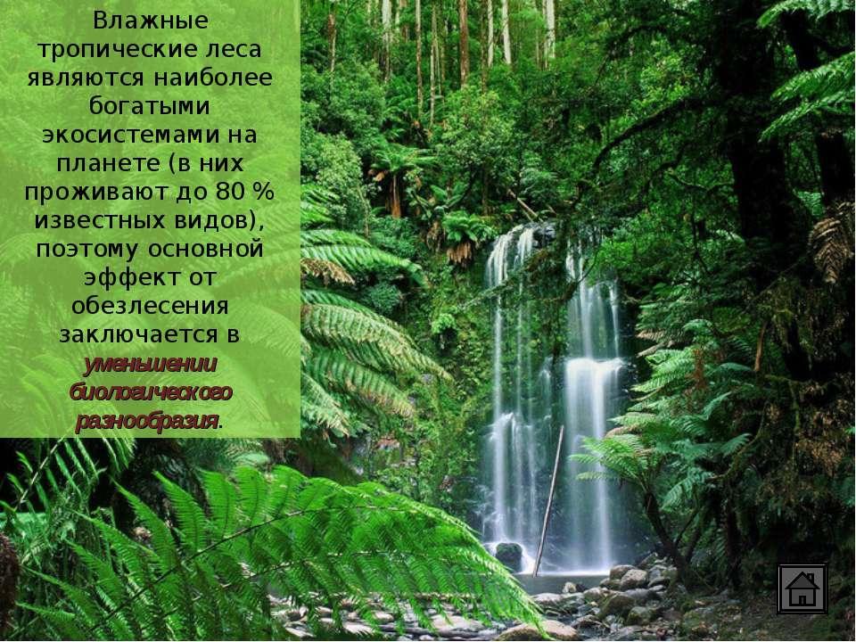 Влажные тропические леса являются наиболее богатыми экосистемами на планете (...