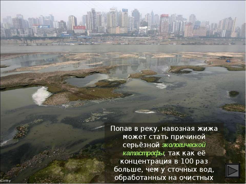 Попав в реку, навозная жижа может стать причиной серьёзной экологической ката...