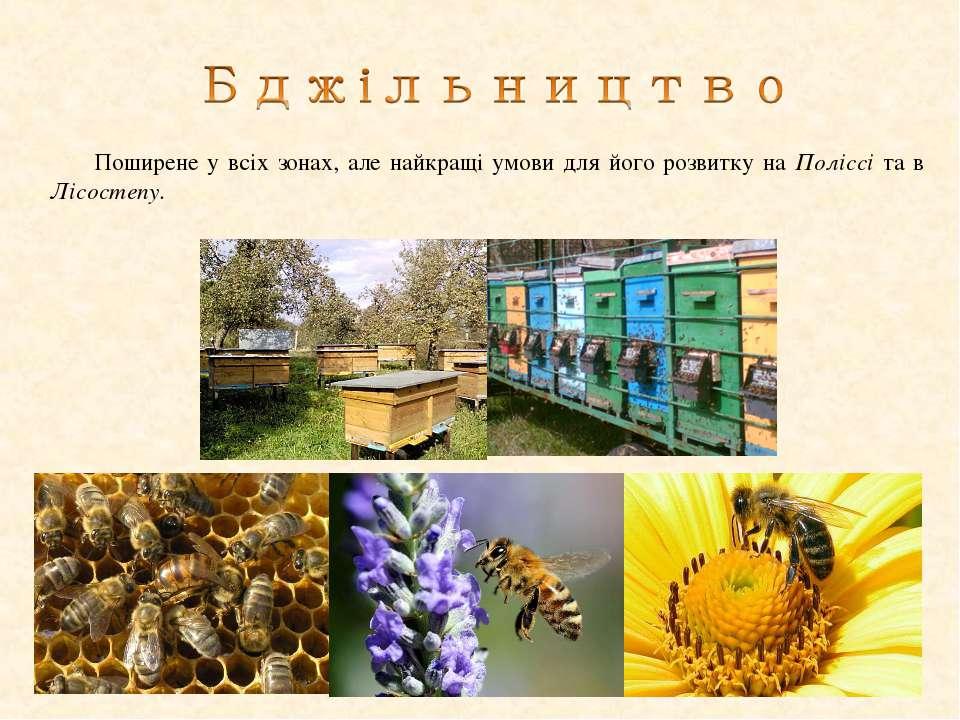 Поширене у всіх зонах, але найкращі умови для його розвитку на Поліссі та в Л...