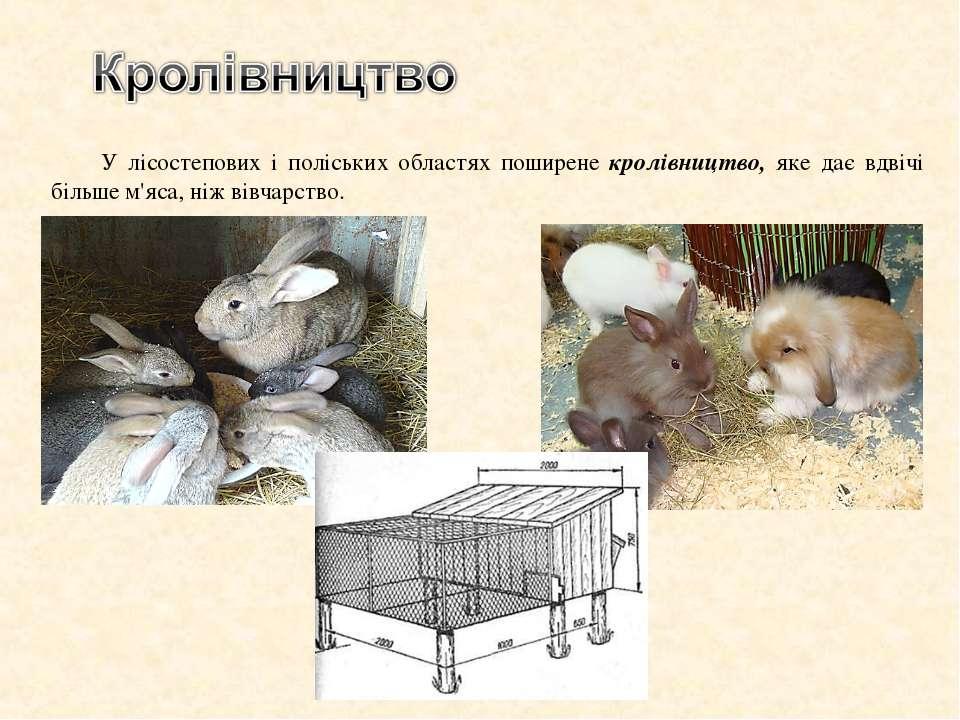 У лісостепових і поліських областях поширене кролівництво, яке дає вдвічі біл...