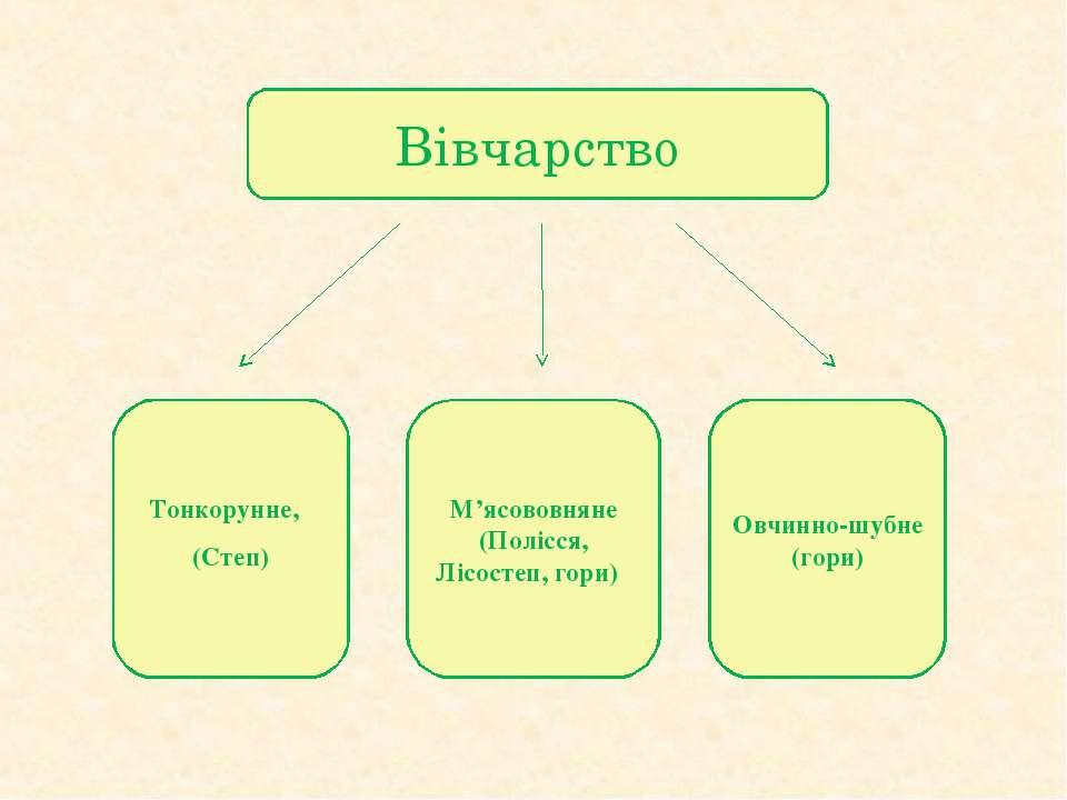 Вівчарство Тонкорунне, (Степ) М'ясововняне (Полісся, Лісостеп, гори) Овчинно-...