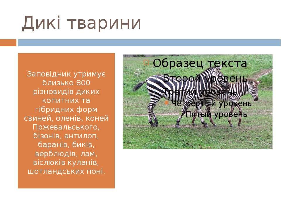 Дикі тварини Заповідник утримує близько 800 різновидів диких копитних та гібр...