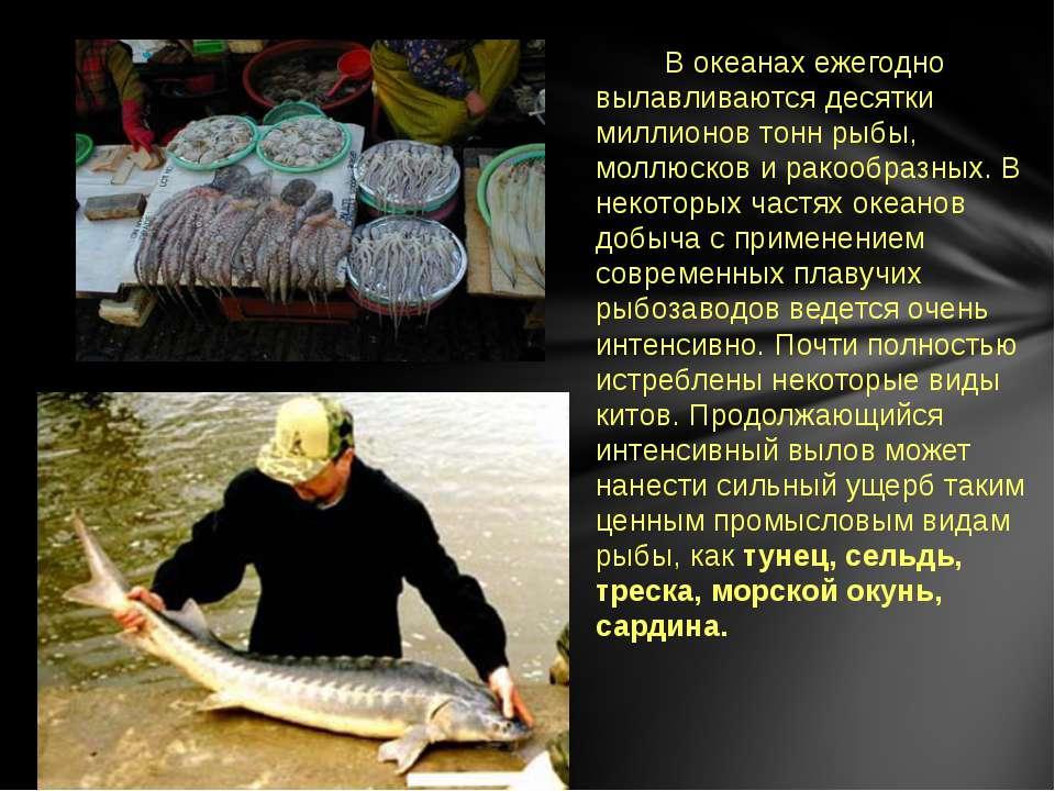 В океанах ежегодно вылавливаются десятки миллионов тонн рыбы, моллюсков и рак...