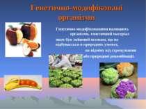 Генетично-модифіковані організми Генетично модифікованими називають організми...