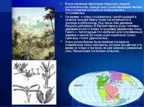 В юре огромные территории покрылись пышной растительностью, прежде всего разн...