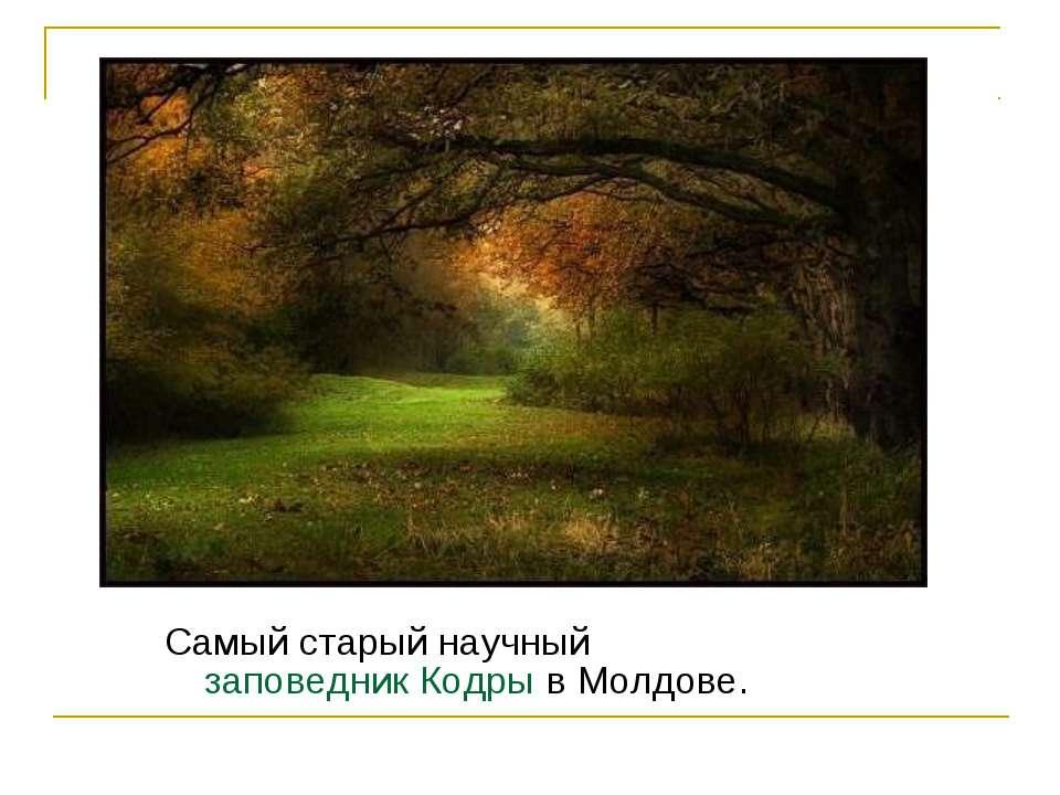 Самый старый научный заповедник Кодры в Молдове.