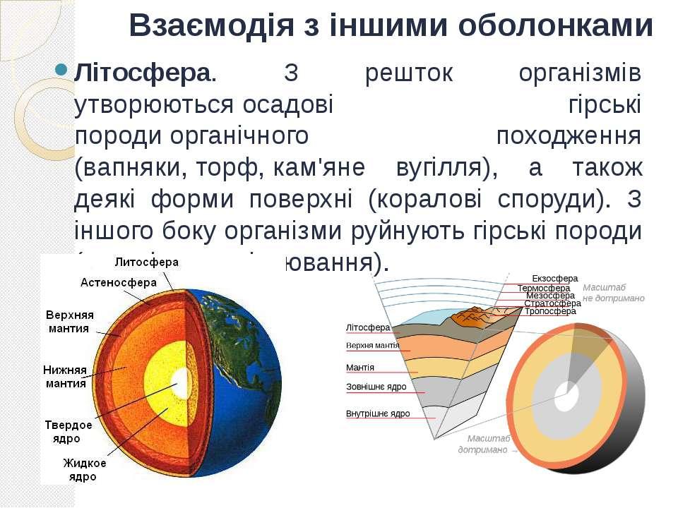 Взаємодія з іншими оболонками Літосфера. З решток організмів утворюютьсяосад...