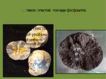 …також пластові поклади фосфоритів.