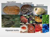 трилобит гастропод брахіопод Коралові поліпи Коралові поліпи