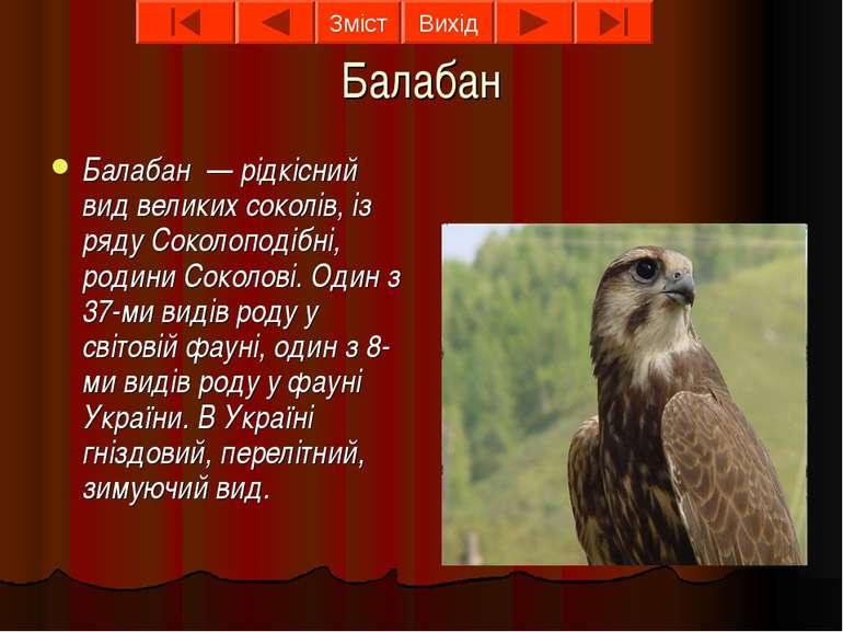Балабан Балабан — рідкісний вид великих соколів, із ряду Соколоподібні, родин...