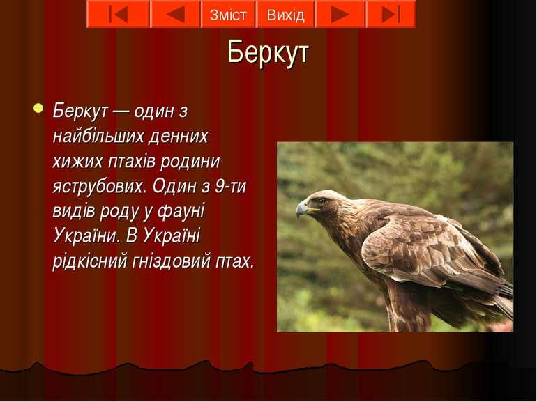 Беркут Беркут — один з найбільших денних хижих птахів родини яструбових. Один...