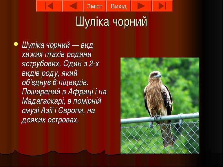 Шуліка чорний Шуліка чорний — вид хижих птахів родини яструбових. Один з 2-х ...