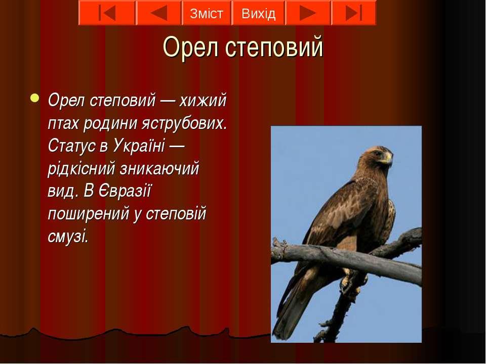 Орел степовий Орел степовий — хижий птах родини яструбових. Статус в Україні ...