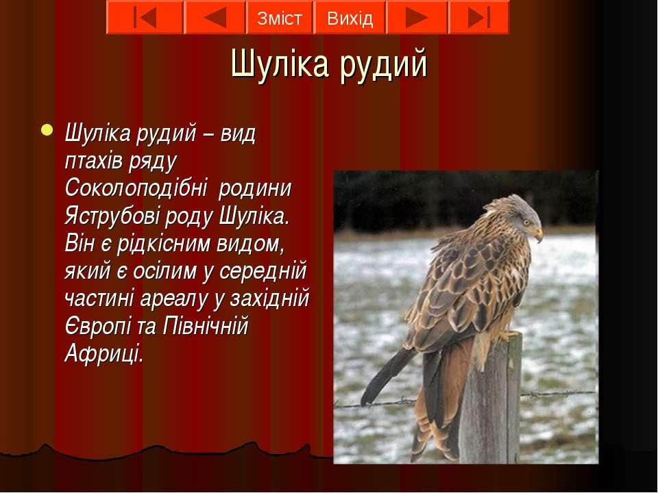 Шуліка рудий Шуліка рудий − вид птахів ряду Соколоподібні родини Яструбові ро...
