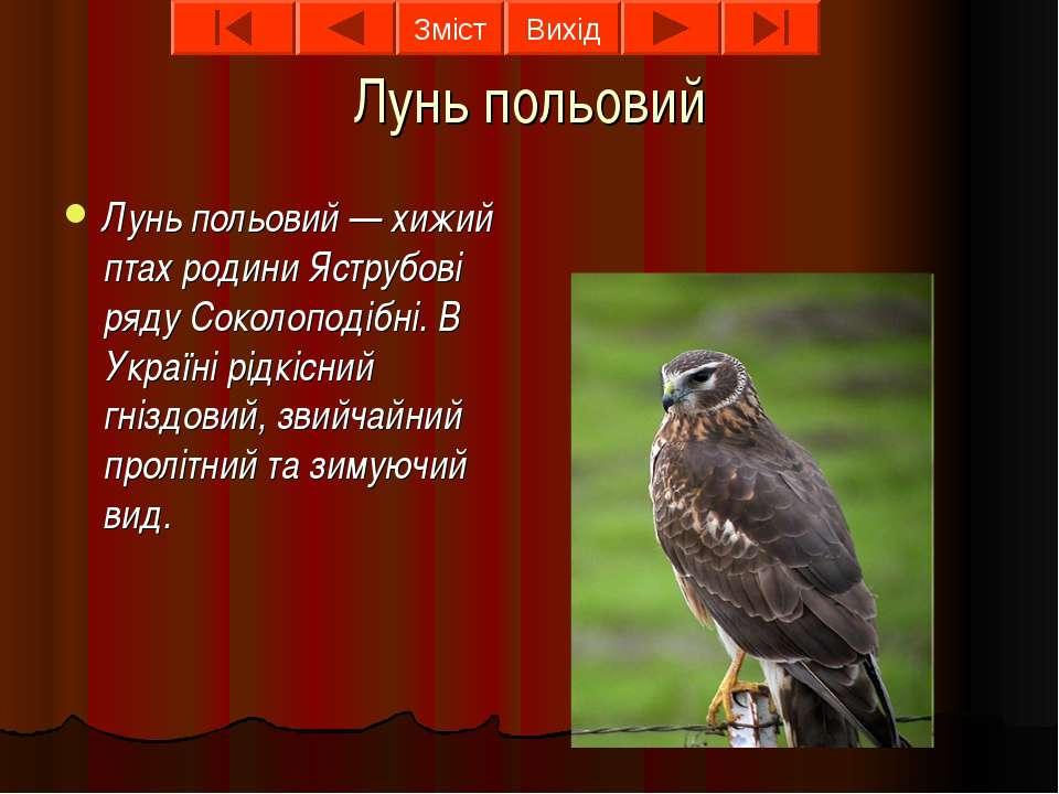 Лунь польовий Лунь польовий — хижий птах родини Яструбові ряду Соколоподібні....