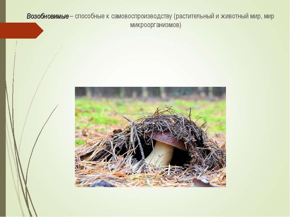 Возобновимые – способные к самовоспроизводству (растительный и животный мир, ...