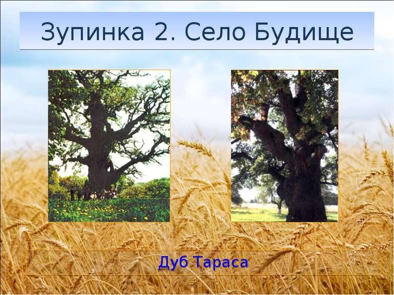 Зупинка 2. Село Будище Дуб Тараса