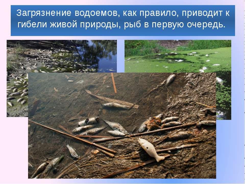 Загрязнение водоемов, как правило, приводит к гибели живой природы, рыб в пер...
